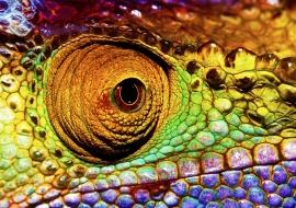 Reptilian eye